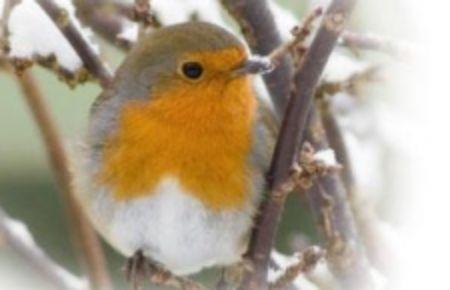 Obrázek pro kategorii Venkovní ptáci