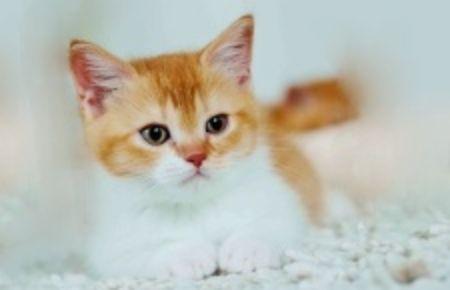 Obrázek pro kategorii Kočky
