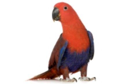 Obrázek pro kategorii Velký papoušek