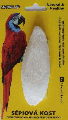 Obrázek Sépiová kost na kartě cca 12 cm