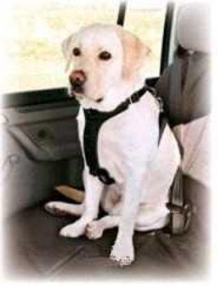 Obrázek Postroj pro psa do auta Trixie L 70-90 cm