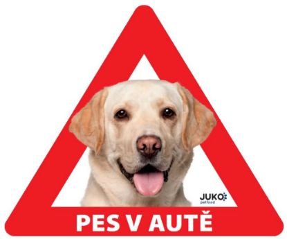 Obrázek Samolepka pes v autě venkovní - labrador žlutý